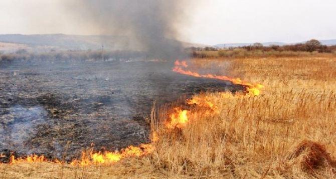 В пригороде Луганска сильный пожар уничтожил ячменное поле и фруктовый сад