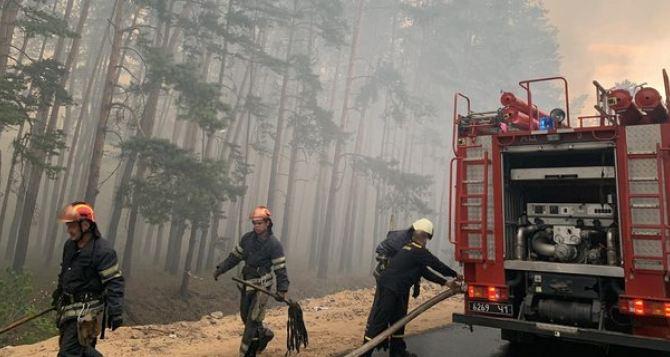 Лесной пожар под Северодонецком до сих пор не потушен. Горят еще два лесничества