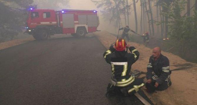 Ущерб от лесных пожаров в Луганской области составил более 450 млн гривен