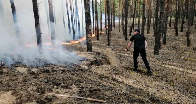 В Кременной опять лесной пожар