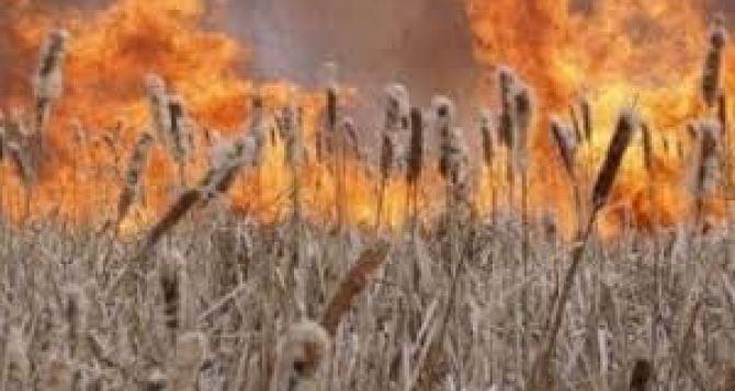 В Станично-Луганском районе на 60 гектарах горел камыш на озерах. ФОТО
