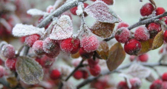 Завтра в Луганске заморозки до 3 градусов ниже нуля ночью и утром