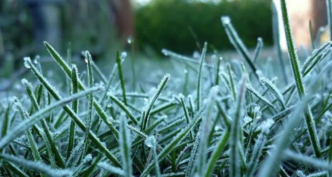 Ночью и утром 5ноября в Луганске ожидаются заморозки до минус трех градусов