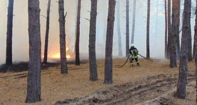 В Луганской области тушат 4 крупных очага пожаров. Тяжелая ситуация у Смоляниново