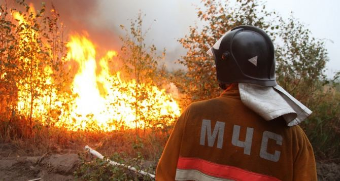 За сутки на пожарах в Луганске и области погибли два человека и выгорели почти 300 гектаров леса, травы и мусора