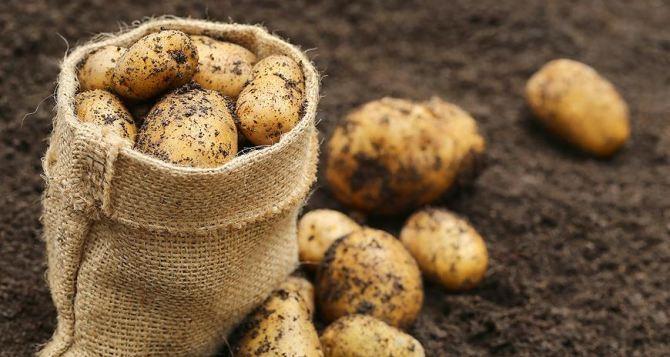 Как выбрать картофель на зиму