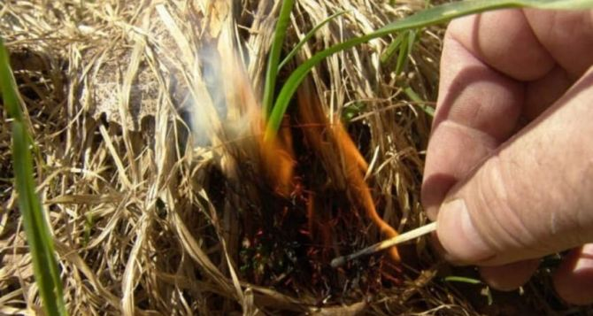 Луганчан предупреждают о штрафах за сжигание сухой растительности