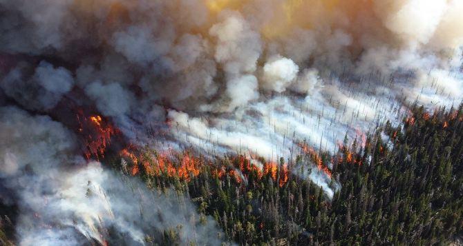 Ущерб от пожаров на Луганщине исчисляется миллиардами гривен,— министр экологии