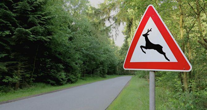В Украине внесли изменения в Правила дорожного движения