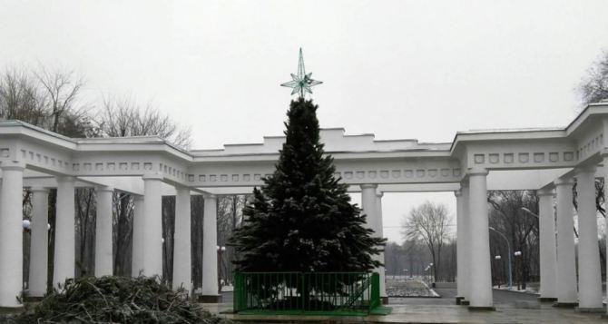 В Луганске вандалы пытались поджечь новогоднюю ель в парке имени Горького. ФОТО