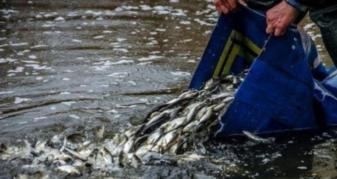 В Луганске в 2020 году выловили более 235 тонн рыбы