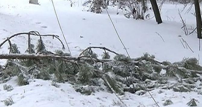 Из-за непогоды без электричества в Донецкой области 11 населенных пунктов, в Луганской— 2 и еще 5 частично