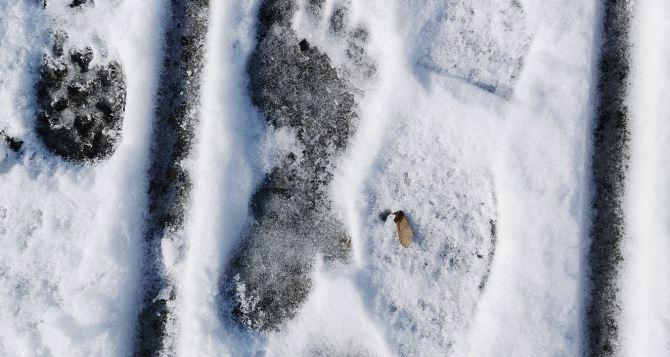 В Луганске, в Парке Горького обнаружены следы «снежного человека». ФОТО. ВИДЕО