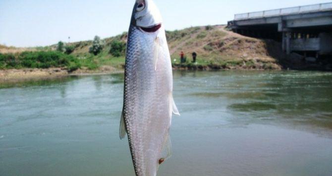 В Луганске весенний запрет на лов рыбы и раков в водоемах вступит в силу с 1апреля