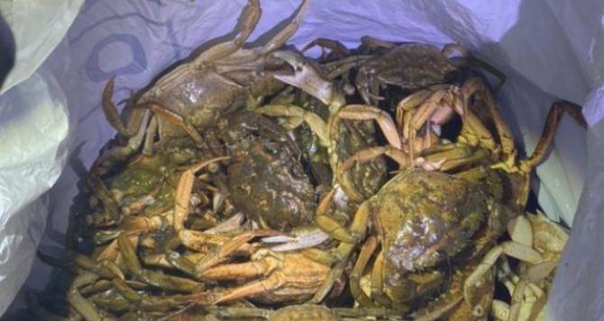 Уроженец Луганска наловил в Одессе крабов на 3 миллиона гривен. ФОТО