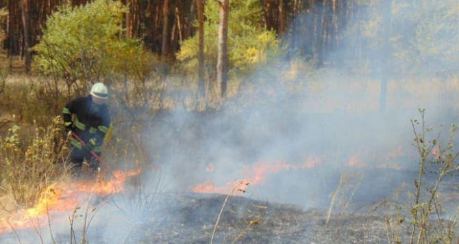 Пожарные Луганщины ликвидировали полтысячи возгораний сухой травы и мусора