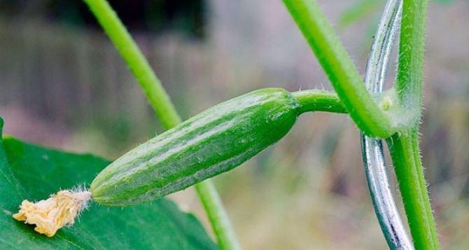 Про что огородники и дачники не должны забывать в июне. План обязательных работ на месяц