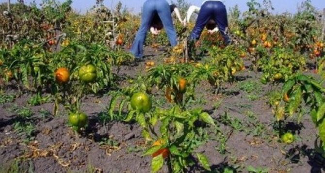 Как правильно бороться с сорняками на огороде
