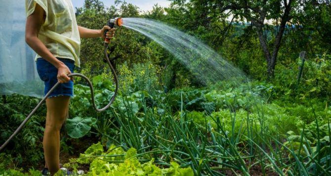Секреты полива разных овощей— советы огородника