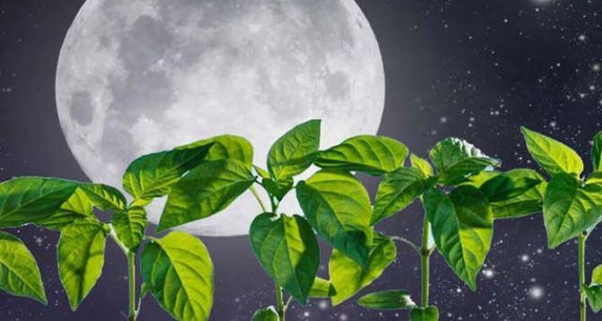 Луна и огород: что и когда садить в конце июня согласно лунному календарю