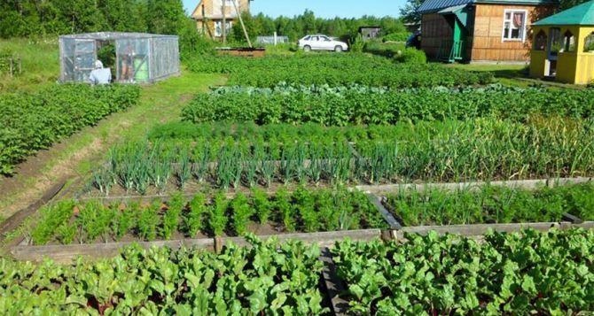 Что обязательно надо сделать на огороде в июле. И как сделать прополку сорняков легкой