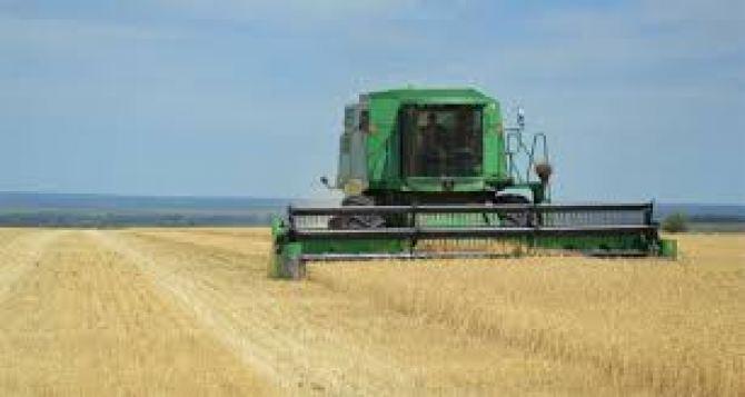 В Луганске заявили, что ожидают хороший урожай пшеницы. Уборочная уже стартует