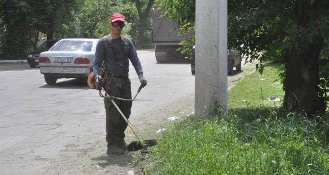 Какая ситуация в Луганске с травой. Кто косит, а кто откосил