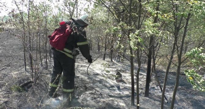 В районе Острой Могилы масштабный пожар угрожал жилым домам и авиаремонтному. ФОТО