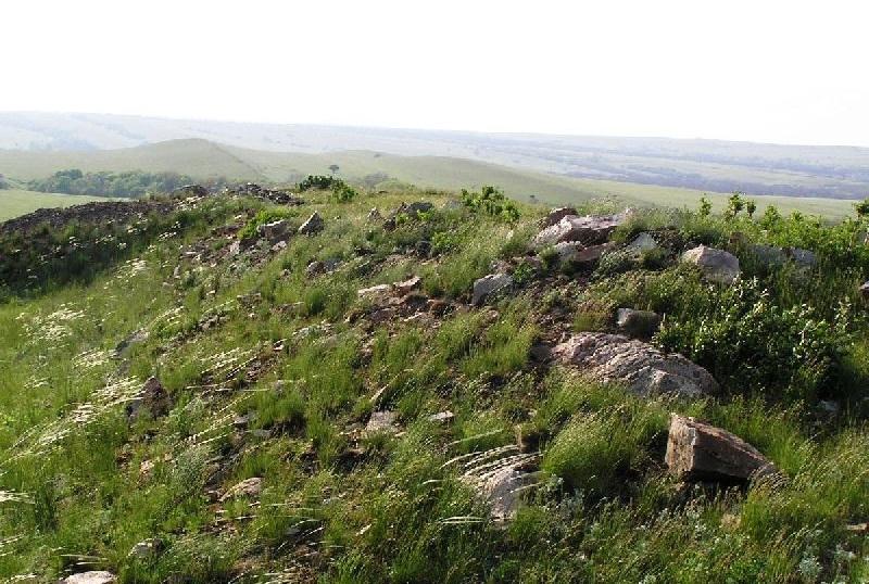 300-летний дуб в провалье - заповеднике луганщины