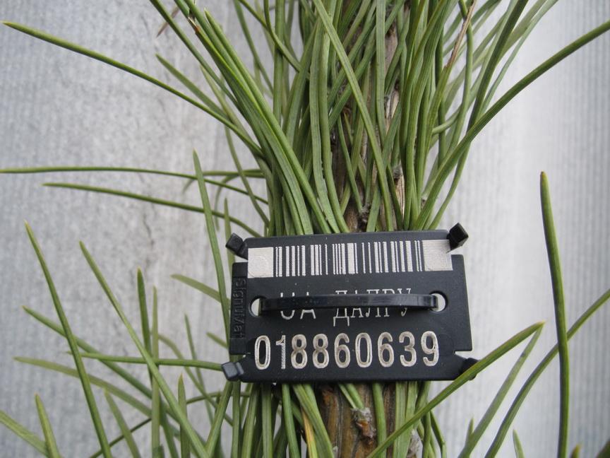 Как выглядят елки по 75 грн? Луганские лесники показали ассортимент +
