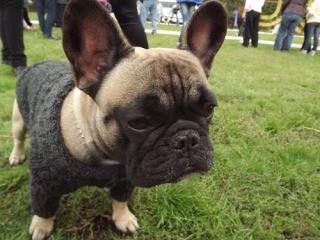 Самые элитные породы собак были представлены на выставке в Луганске (фото)
