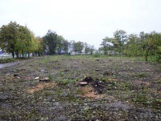 За срубленные в кв. Якира деревья арендатор заплатил 400 тысяч гривен