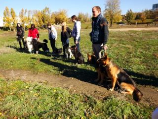 Стало известно, каких собак в Луганске можно не бояться (фото, видео)