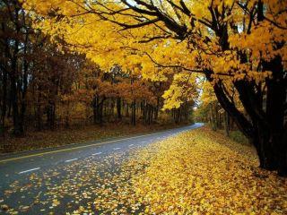 Синоптики рассказали о погоде в начале ноября