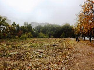 Вырубка деревьев в квартале Якира: история с привкусом бензина