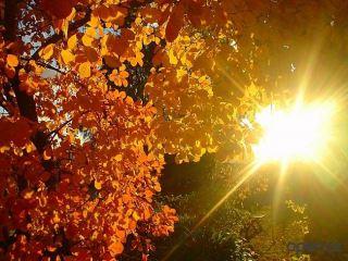 Температура воздуха в октябре и ноябре побила рекорды