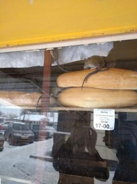 В Ровеньках крысы оккупировали киоск для продажи хлеба. ФОТО