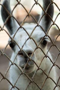 Луганский зоопарк после военных действий +