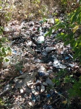 Берег Луганского моря очистили от бытового мусора. ФОТО