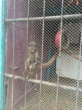 Как работает зоопарк в Луганске? +